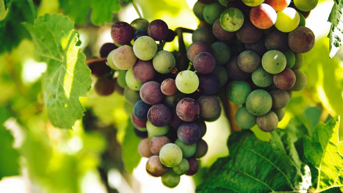 Besuch in den Weinkellern